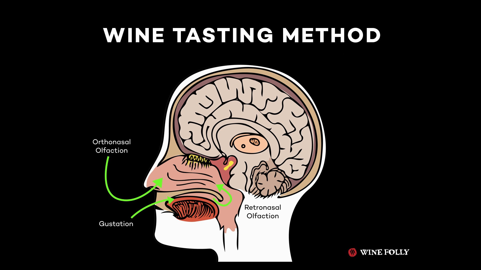 Wistia video thumbnail - How To Taste Wine
