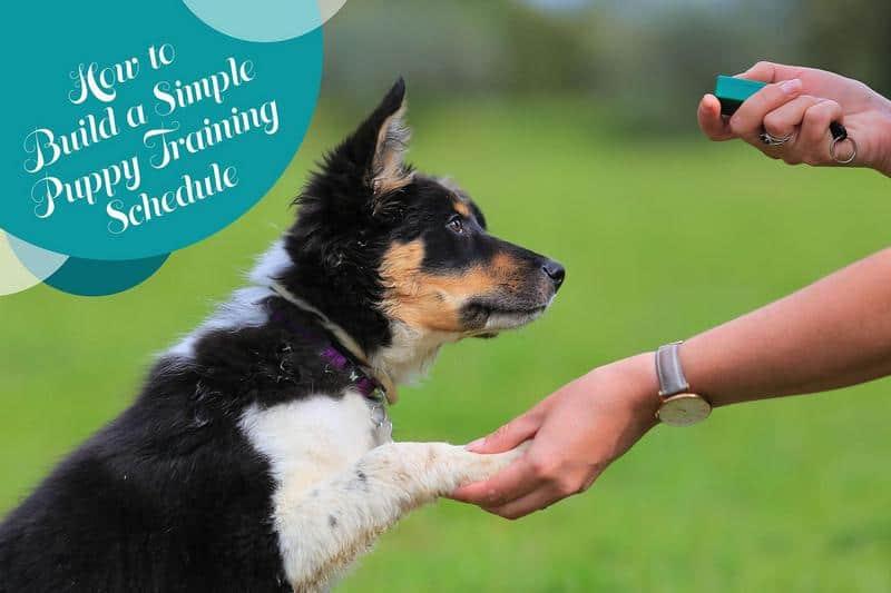 Puppy Training Schedule