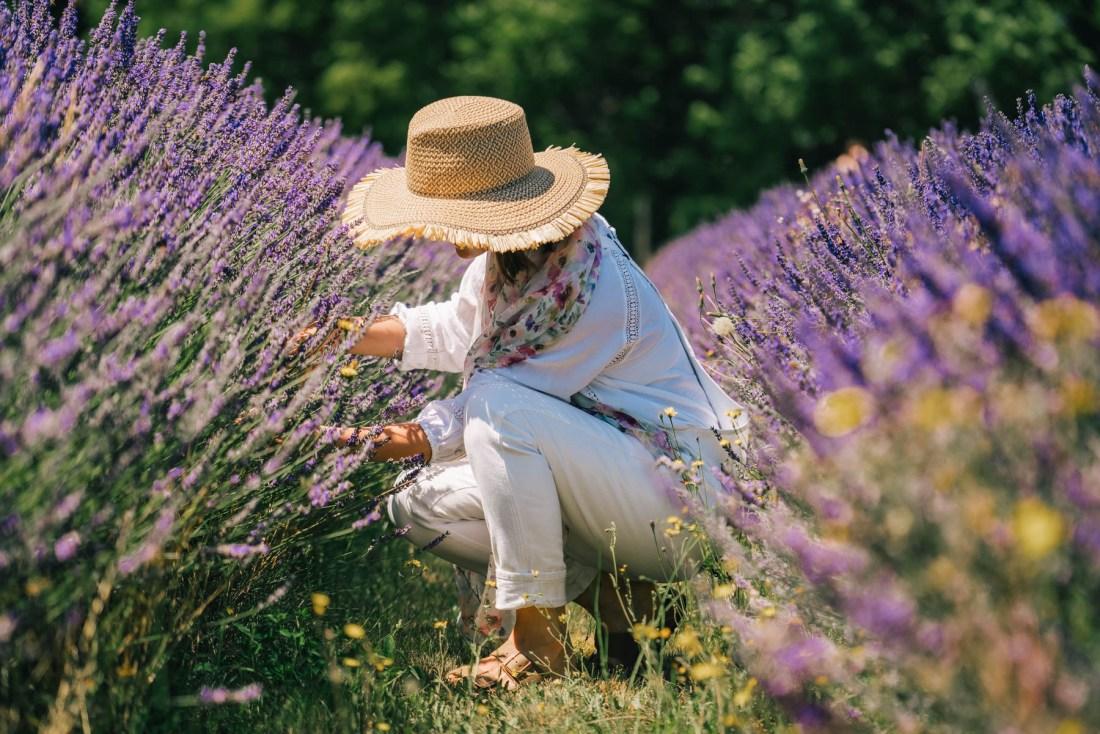 Hood River Lavender Farm best lavender farms oregon
