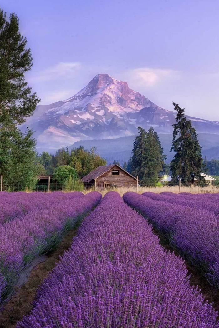 10 Adventurous Day Trips from Portland You Should Take by Summer's End