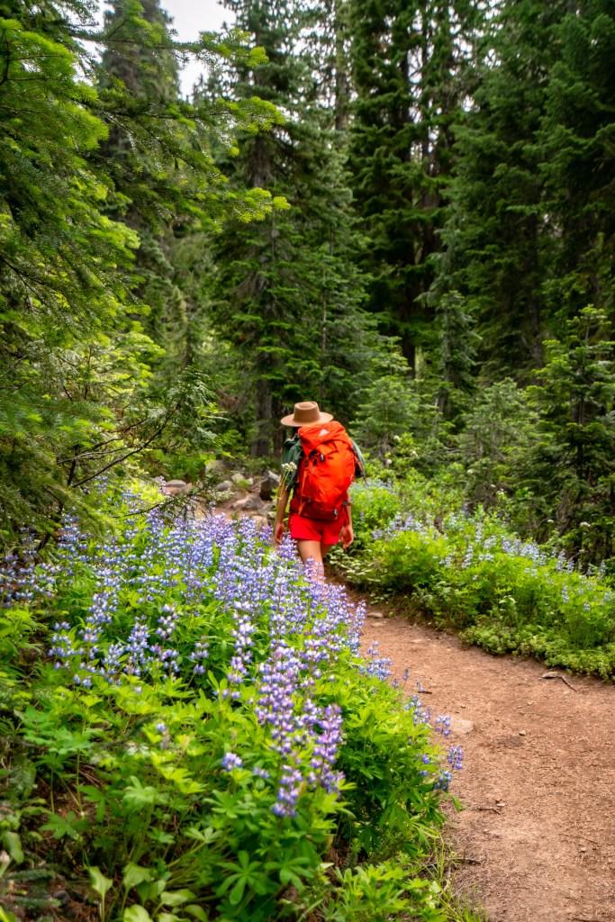 10 EPIC Wildflower Hikes at Mt. Rainier National Park (+Stunning Photos)