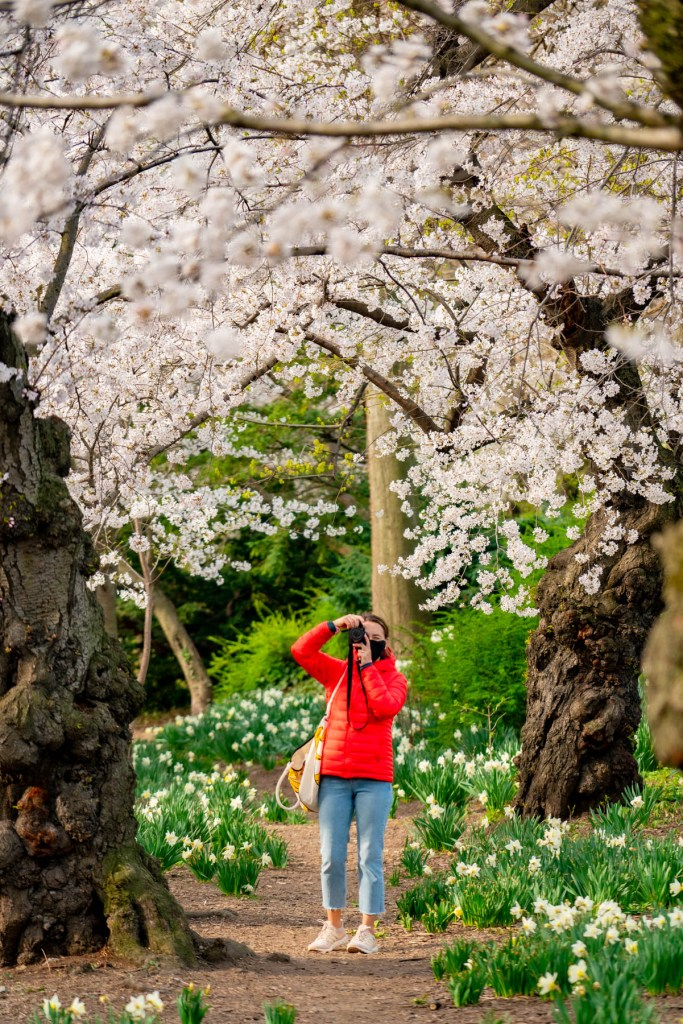 The 10 Best Spots for Cherry Blossoms in New York City