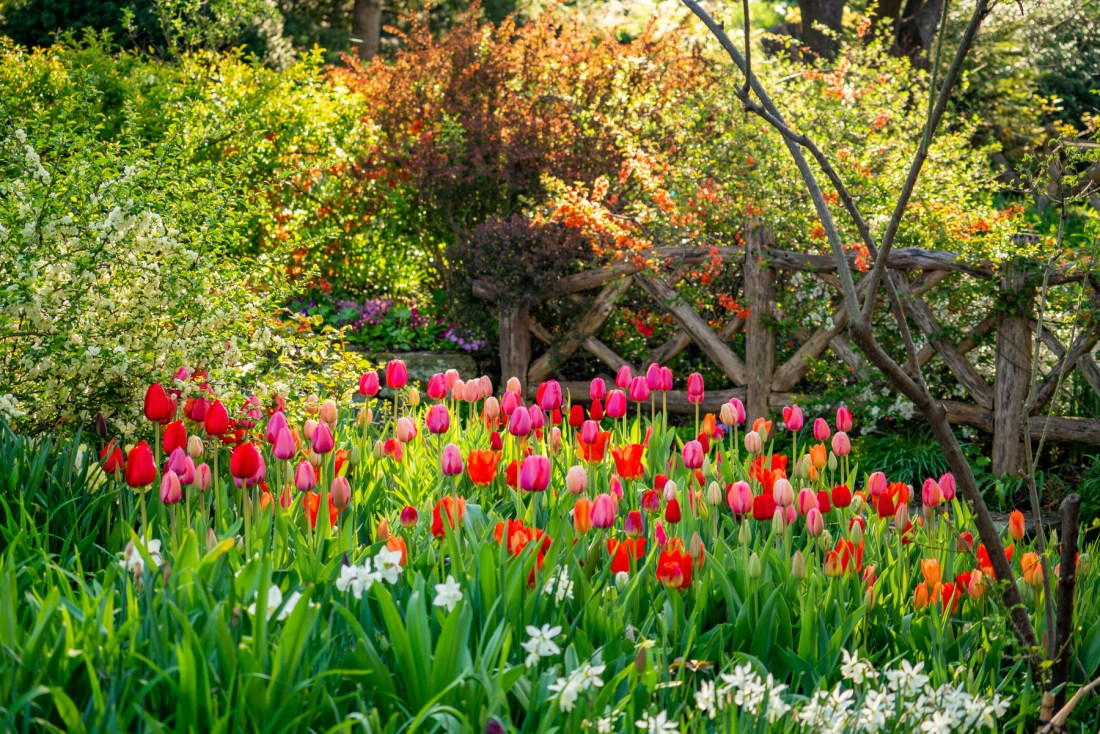 best spots for spring color Central Park