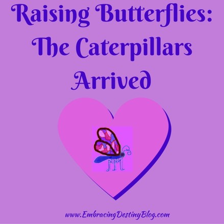 Raising Butterflies in our homeschool at embracingdestinyblog.com. Read the series!