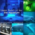 Summer Bucket List: Aquarium @destinyblogger