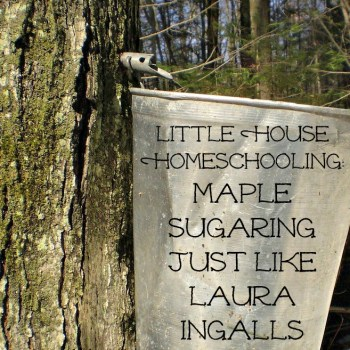 Little House Homeschooling: Maple Sugaring at Home