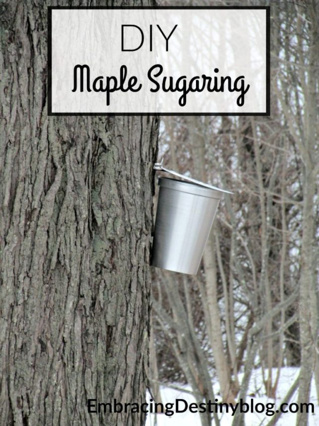 Read about our experience with DIY Maple Sugaring at home. You can try it too with Tap My Trees! embracingdestinyblog.com