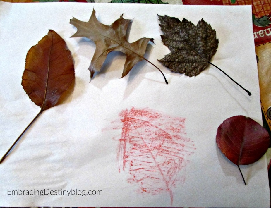 Leaf rubbings as part of a basic nature study. Nature Study for Beginners. embracingdestinyblog.com