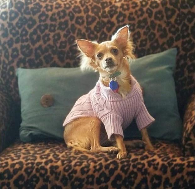 Animal Companion Loss Support