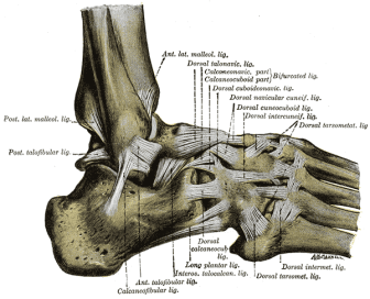 Lateral ligaments foot From Wikipaedia.com