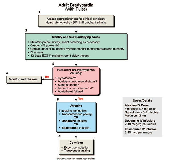 acute coronary syndrome guidelines 2017