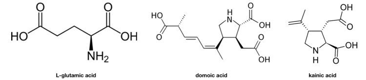 Domoic acid by Krakatit - Own work. From https://en.wikipedia.org/wiki/Domoic_acid#/media/File:Domoic_acid.svg. Kainic acid by Edgar181 - Own work. From https://en.wikipedia.org/wiki/Kainic_acid#/media/File:Kainic_acid.png. L-glutamic acid by NEUROtiker - Own work. From https://en.wikipedia.org/wiki/Glutamic_acid#/media/File:L-Glutaminsäure_-_L-Glutamic_acid.svg