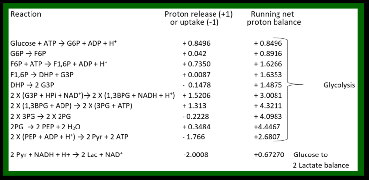 Figure 29. Proton balance at pH 7.