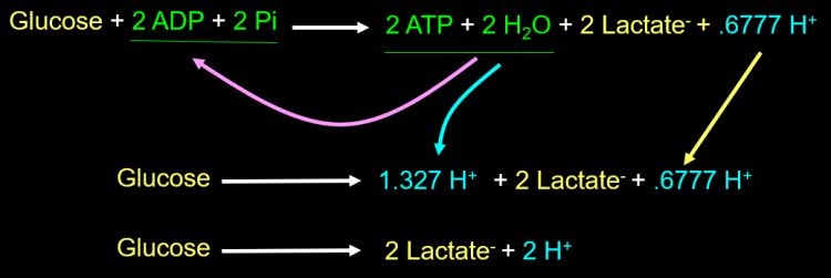 Figure 31. Glucose to lactate after ATP hydrolysis at pH 7.