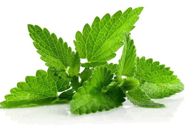 EMERA Nourishing CBD Scalp Therapy | Menthol leaf