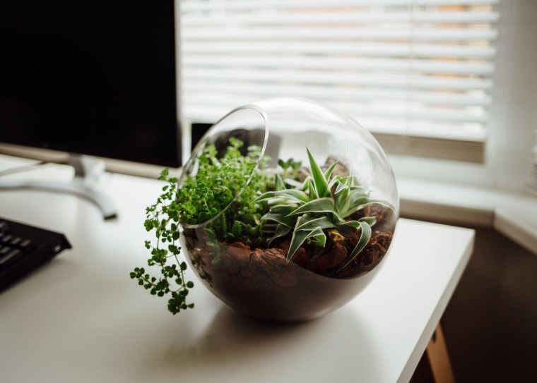 A small terrarium on a desk with plants growing inside.