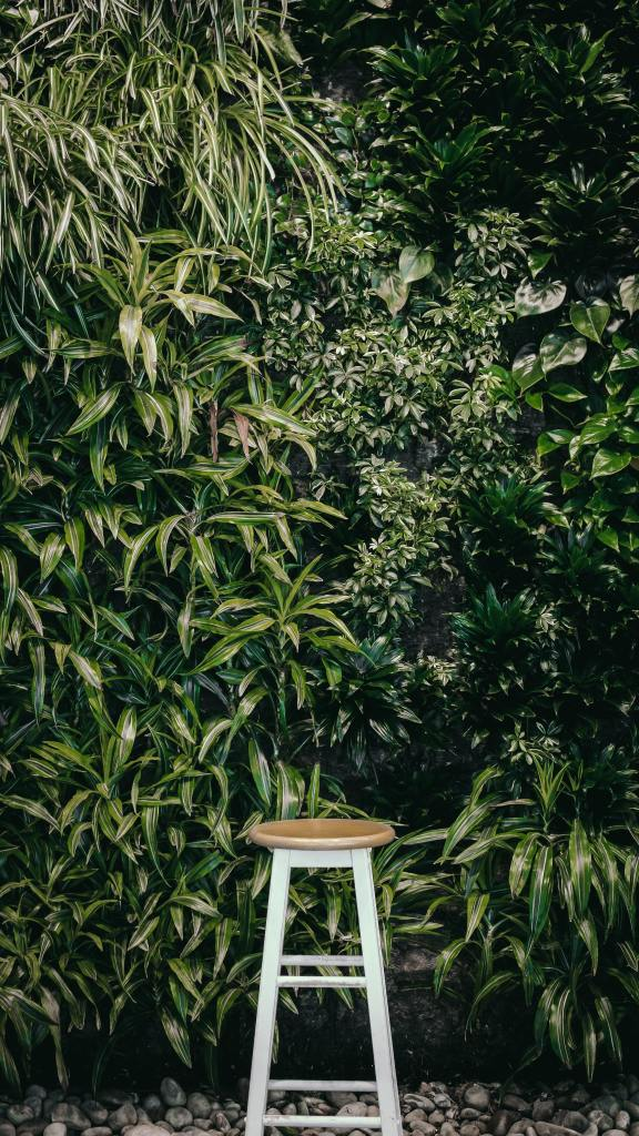 A simple white stool sits infront of a lush looking green wall