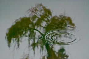 Vince Ferguson - Reflected Tree - Digital Image
