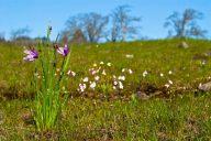 Vince Ferguson - Grass Widow Landscape - Digital Image