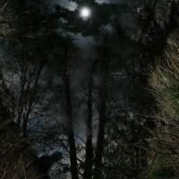 Mortui nocte