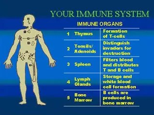 diagram of the human immune system