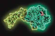 1069711_factor-xa-molecular-structure-15
