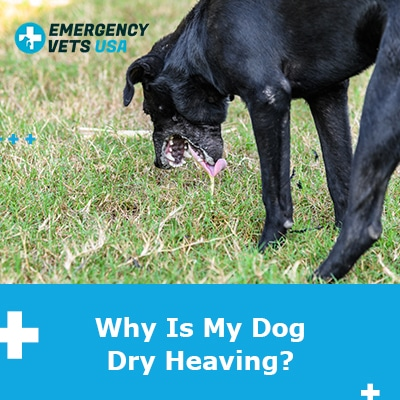 Why Is My Dog Dry Heaving? Here Are The Reasons And What To Do