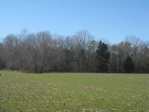 The Union cavalry fought the Confederates through this ground on the afternoon of May 31.