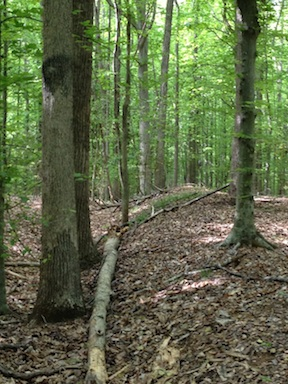 The Park Service has called Stevenson Ridge's earthworks among the best-preserved fortifications in private ownership.