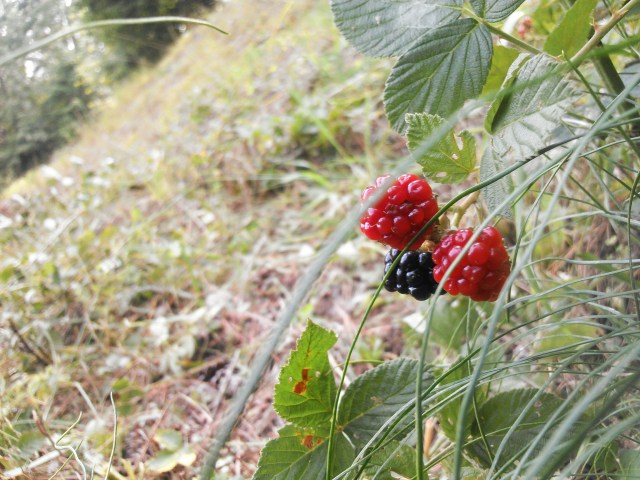 Earthwork Berries