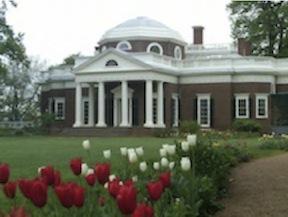 Montecello Tulips