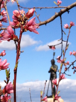 Gettysburg Peach Orchard