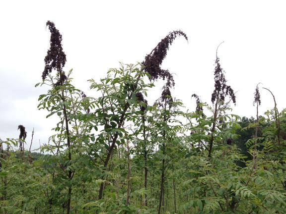 Dead Plants 051216