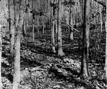 Skeletons in the Wilderness