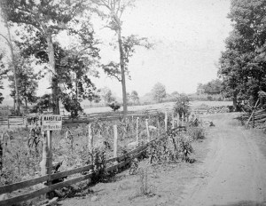 Postwar image of the East Woods at Antietam.