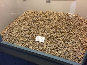 A display of over 60,000 bullets dug from the local camps.