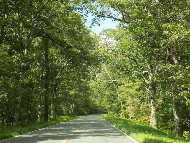 A wooded section of Skyline Drive during the summer season. (Go in autumn and take pictures to make me jealous!)