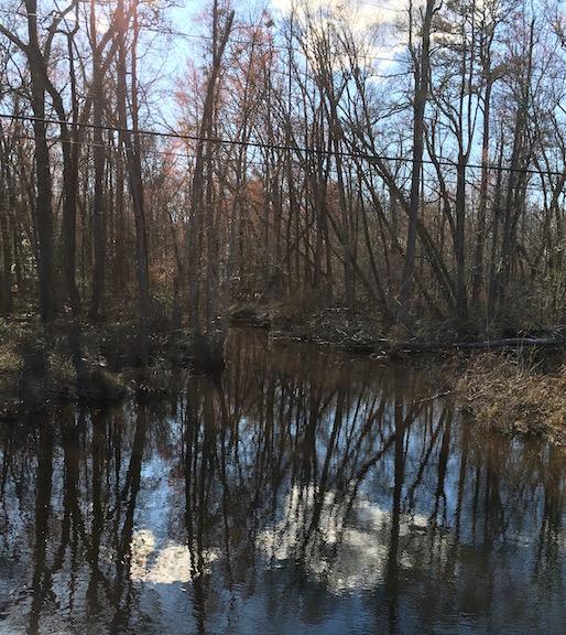 white-oak-swamp