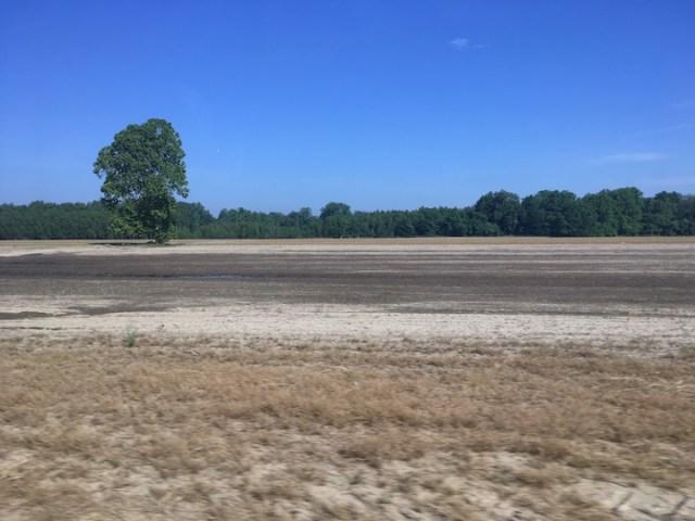 Bruinsburg Flood Plain