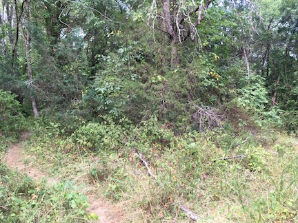Path to Pelham