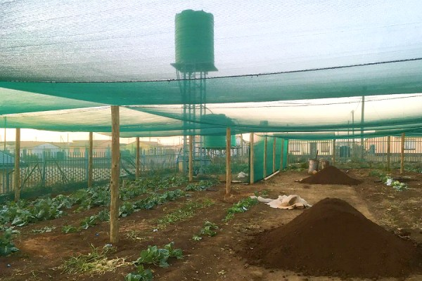 40% shade net structure, shade cloth, reduce heat, light intensity, UV management, photo selective colour nets, growth development, higher yield, emerging farmers