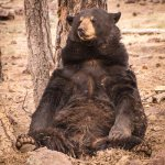 Jack chills at Bearizona wildlife park