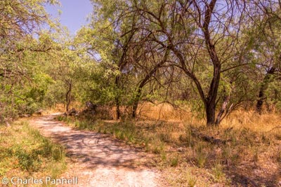 The Canopy Trail at Dead Horse Ranch State Park