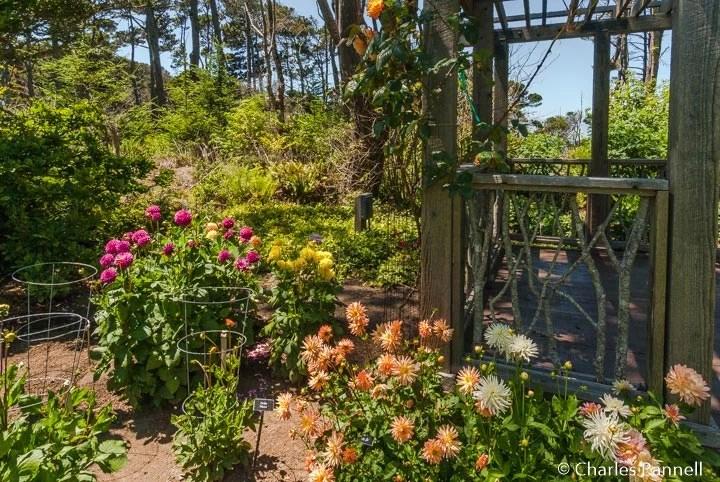 "<a href=""http://emerginghorizons.com/access-upgrades-abound-at-mendocino-coast-botanical-gardens/"">Access Upgrades Abound at Mendocino Coast Botanical Gardens</a>"