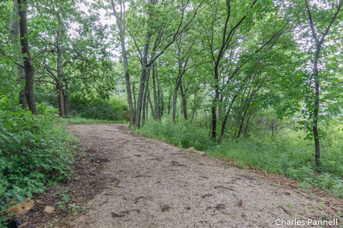 The interpretive trail near Doud Campground