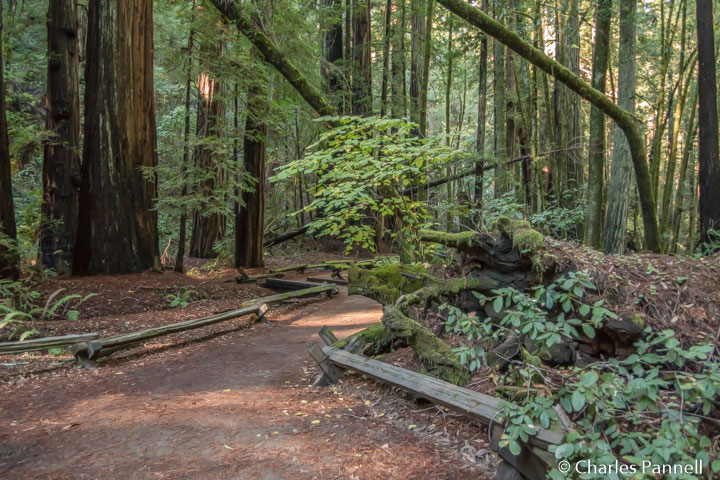 Start of the Pioneer Nature Trail in Armstrong Redwoods State Park, Guerneville, California