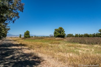 The Wetlands Trail at the Sacramento National Wildlife Refuge