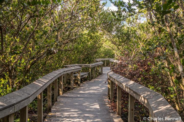 Bobcat Boardwalk in Shark Valley
