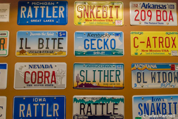 Vanity rattlesnake license plates at the American International Rattlesnake Museum