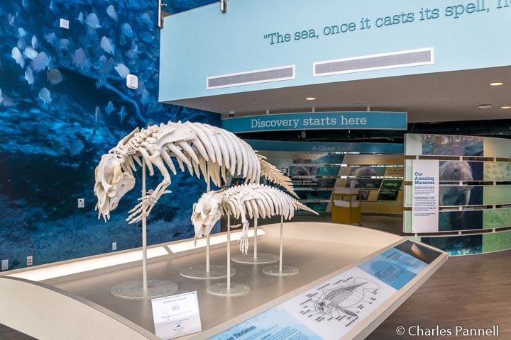 Exhibits inside the Manatee Lagoon Center